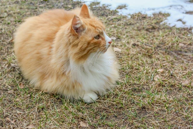 Le chat r?chauffe au printemps le soleil pr?s de la neige photos stock