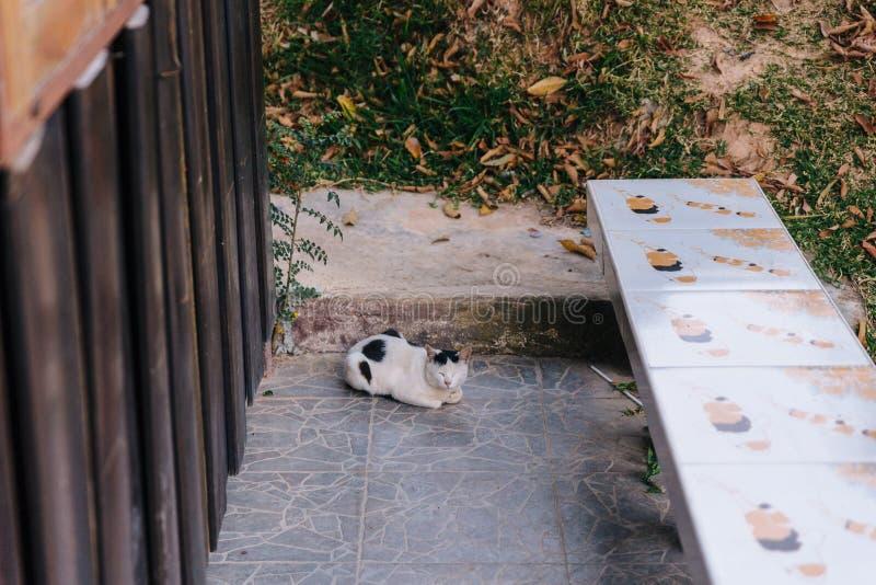 Le chat rampant au sol et ferment ses yeux en Chiang Mai, Thaïlande photographie stock libre de droits