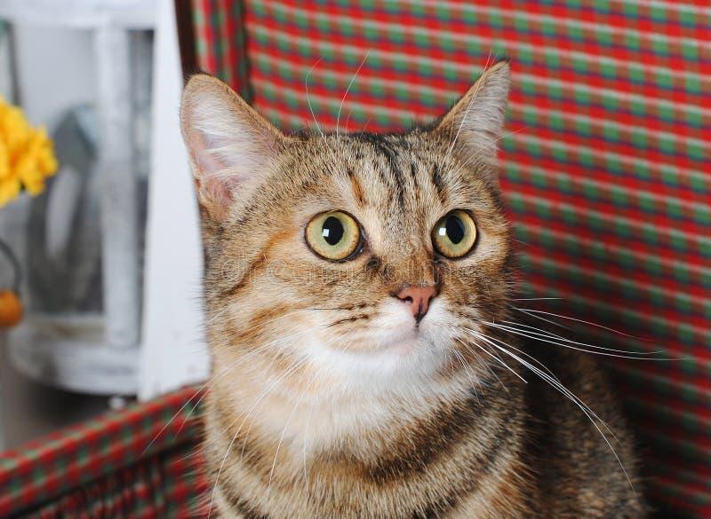 Le chat rayé se repose dans une rétro valise Verticale proche image libre de droits