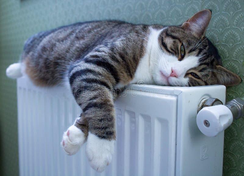 Le chat rayé velu se trouve sur le radiateur chaud se reposant et détendant photographie stock libre de droits