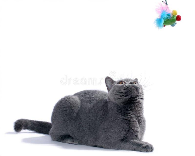 Le chat recherchent images libres de droits