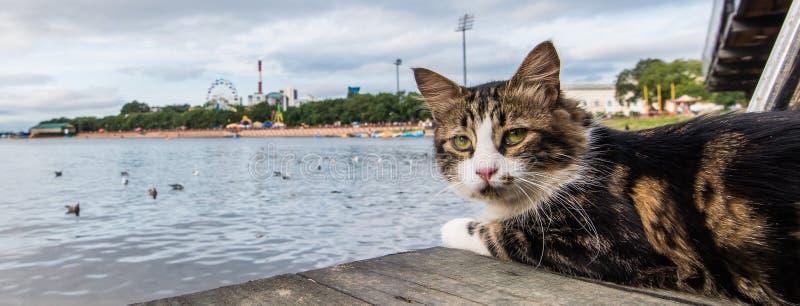 Le chat regarde avec les yeux soigneux images libres de droits