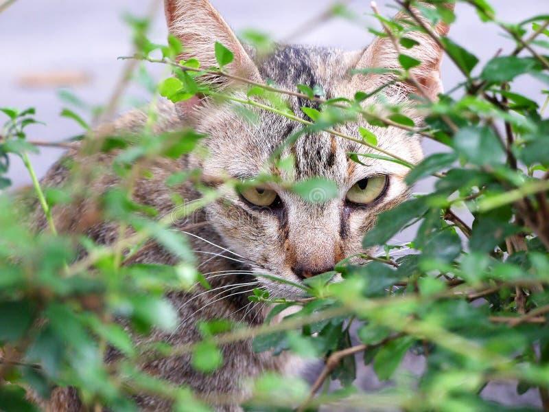 Le chat regarde par derrière un arbre image stock