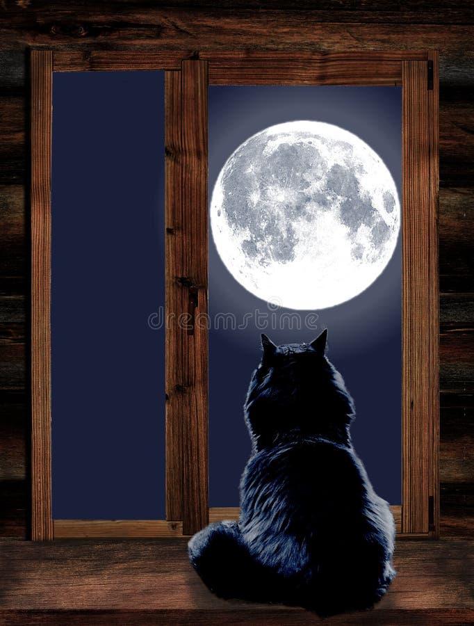 Le chat regarde par la fenêtre la pleine lune images libres de droits