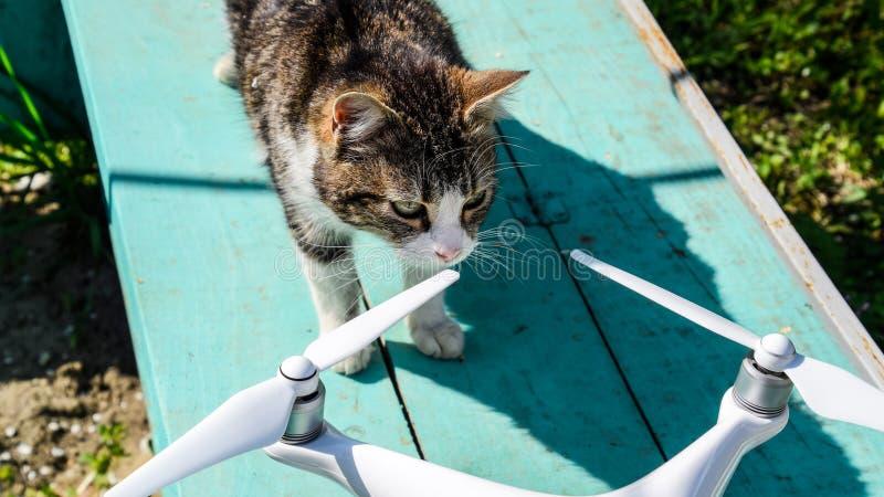 Le chat renifle le fantôme 4 du bourdon DJI Étonnez l'animal avec un nouvel instrument Quadrocopter et animal familier Chat et bo images libres de droits