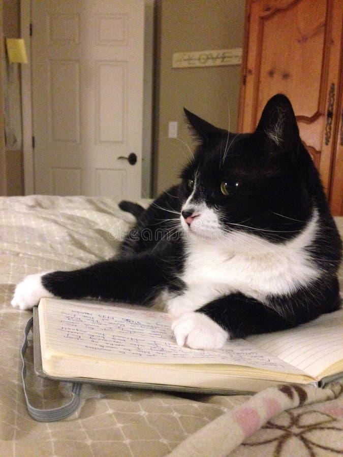 Le chat s'étend sur le livre photographie stock libre de droits