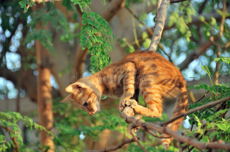 le chat sautent prêt à l'arbre photos libres de droits