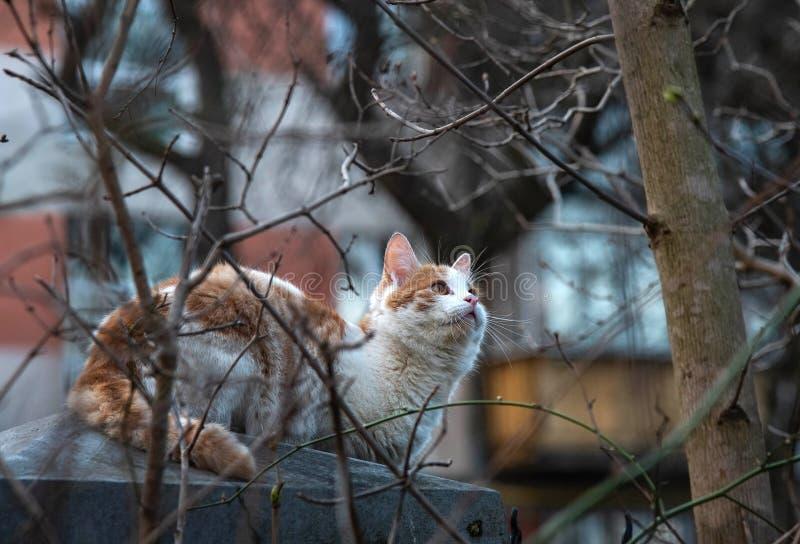Le chat se repose sur la barrière et chasse les oiseaux photographie stock