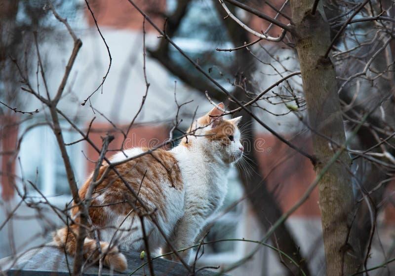 Le chat se repose sur la barrière et chasse les oiseaux photos libres de droits