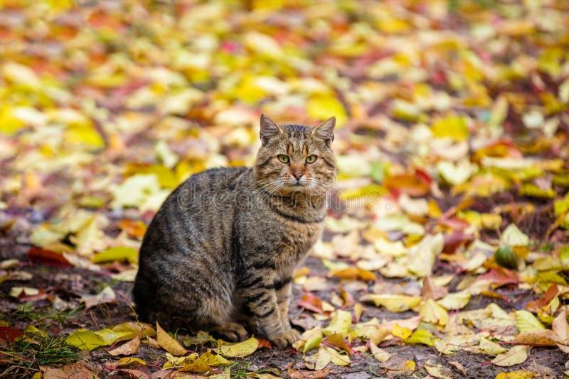 Le chat se repose sur les feuilles tombées photos libres de droits