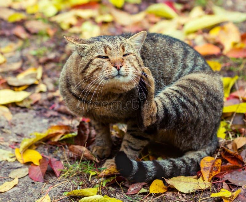 Le chat se repose sur les feuilles tombées photographie stock libre de droits