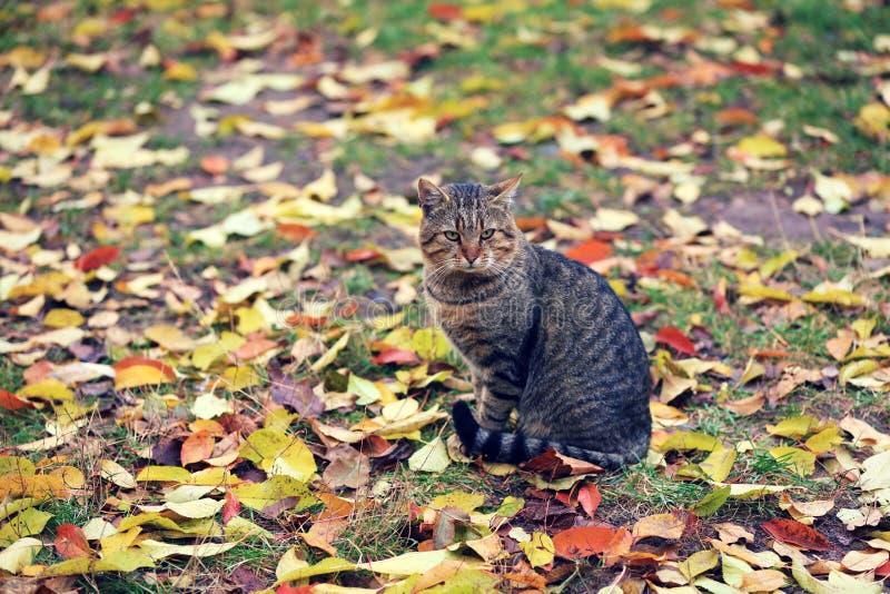 Le chat se repose sur les feuilles tombées images stock