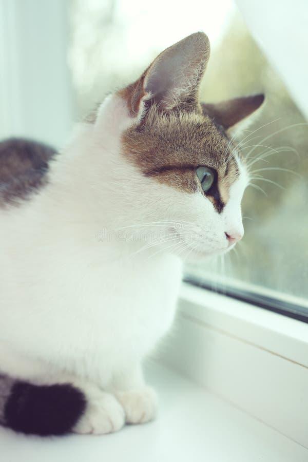 Le chat se repose sur un filon-couche blanc de fenêtre photos libres de droits