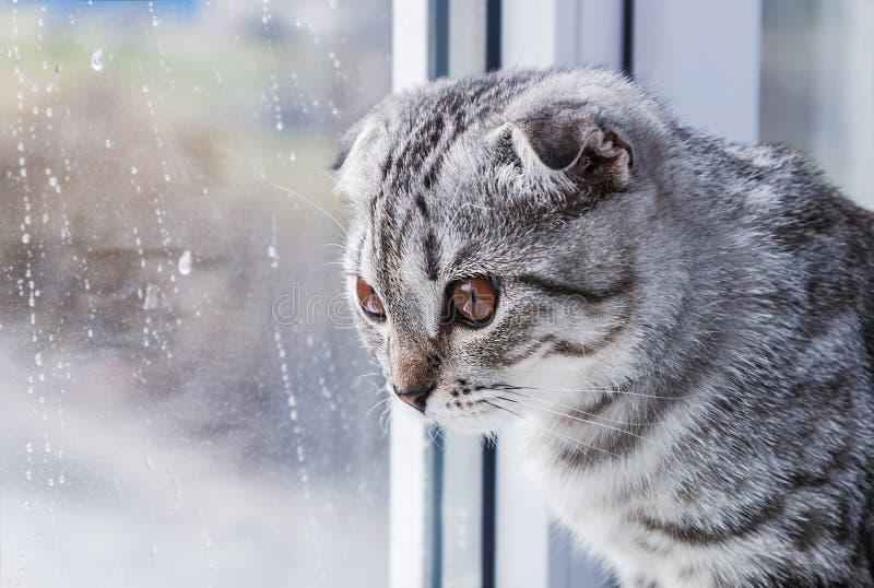Le chat se repose sur un rebord de fenêtre et un regard photo stock