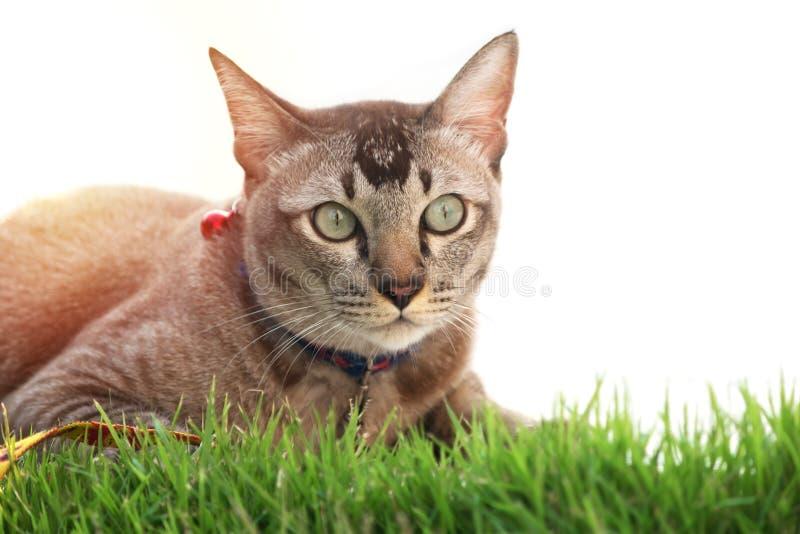 Le chat se reposent sur l'herbe verte images libres de droits