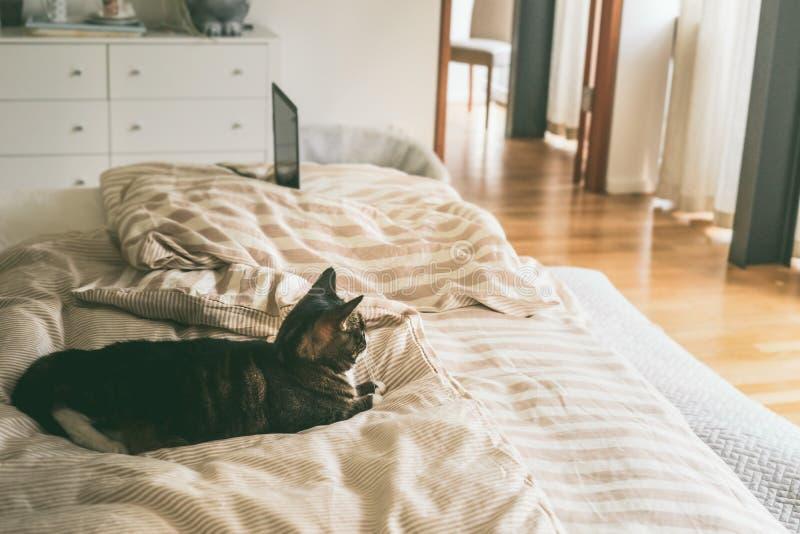 Le chat se situe dans le lit dans la chambre à coucher avec la grande fenêtre photos stock