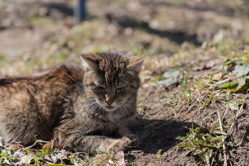 Le chat se trouvant au sol est passionné au soleil et déguisé comme paysage photos libres de droits
