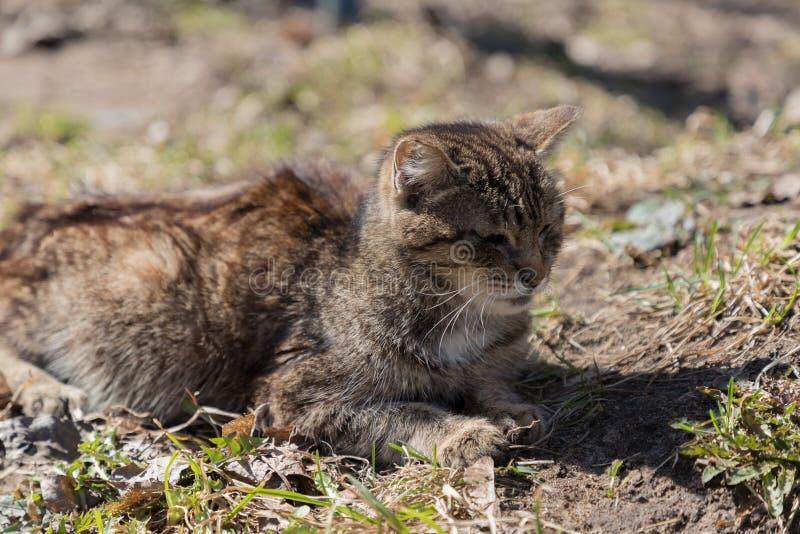 Le chat se trouvant au sol est passionné au soleil et déguisé comme paysage photo stock
