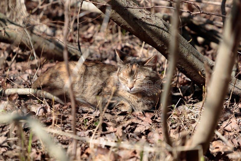 Le chat se trouvant au sol est passionné au soleil et déguisé comme paysage photos stock