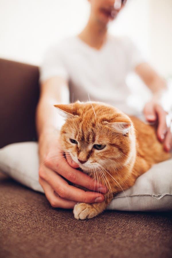 Le chat se trouve sur un oreiller ? la maison pr?s de son ma?tre images stock