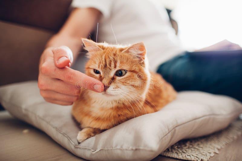 Le chat se trouve sur un oreiller ? la maison pr?s de son ma?tre photographie stock libre de droits