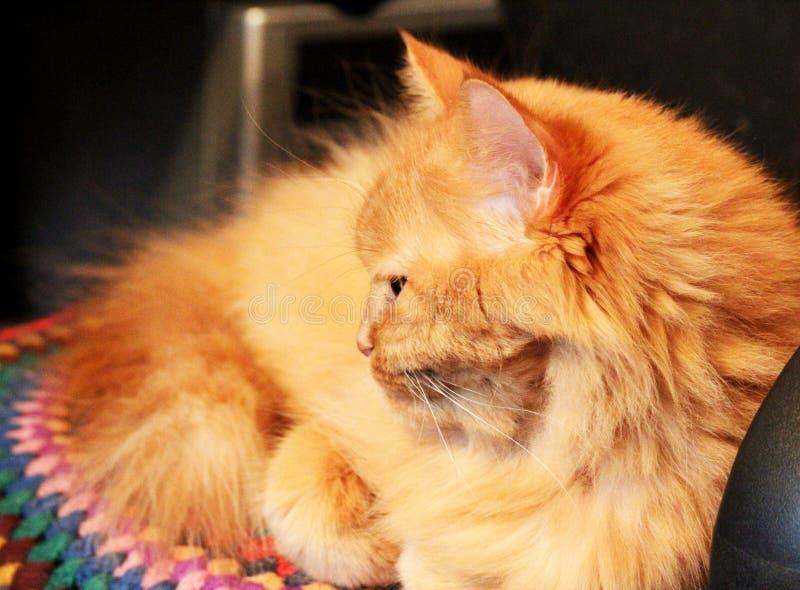 Le chat se trouve sur une chaise et a tourné loin un museau photo libre de droits