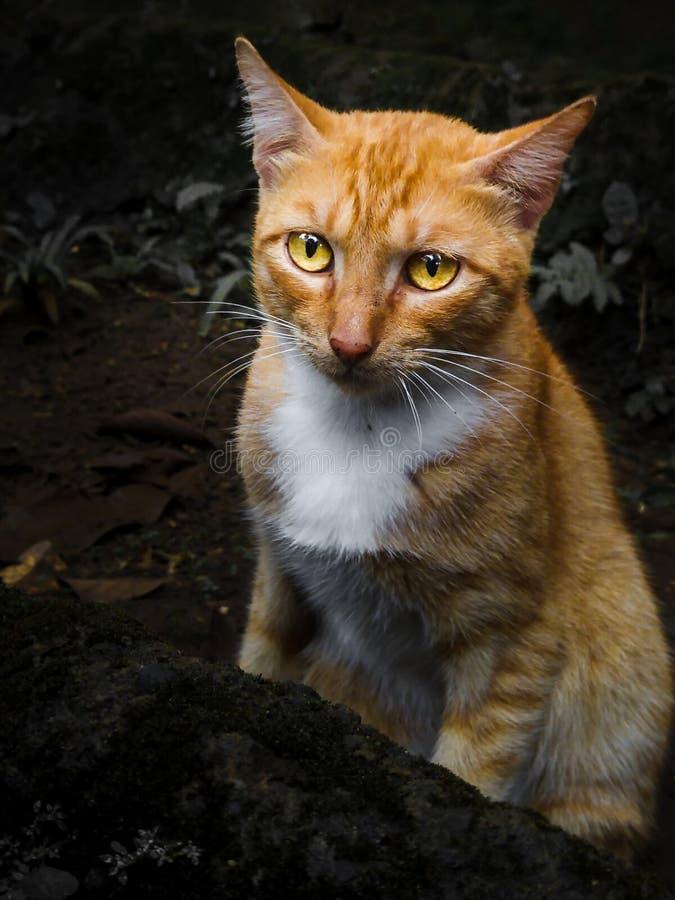 Le chat a semblé confus photo stock