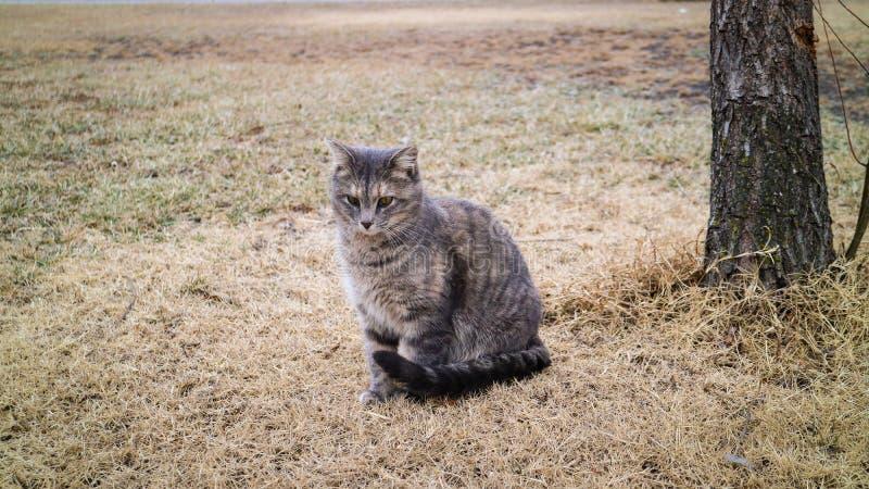 Le chat seul s'asseyent avec le temps froid photographie stock