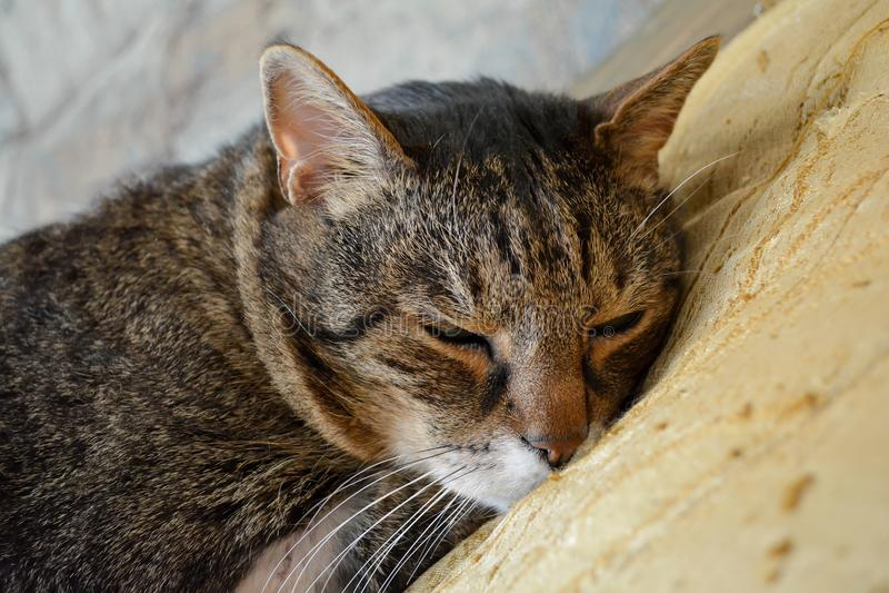 Le chat somnole photos libres de droits