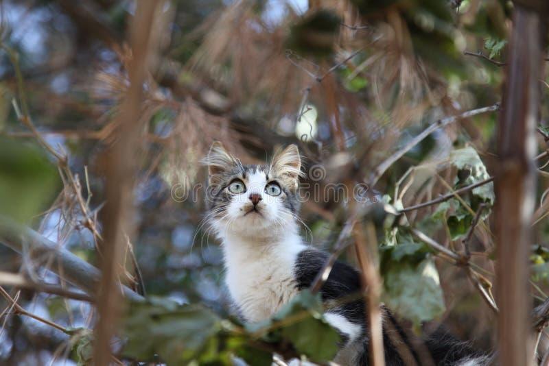 Le chat sur l'arbre photographie stock