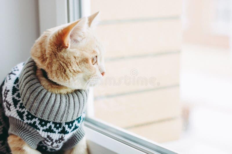 Le chat sur le rebord de fen?tre repose et regarde la fen?tre image libre de droits