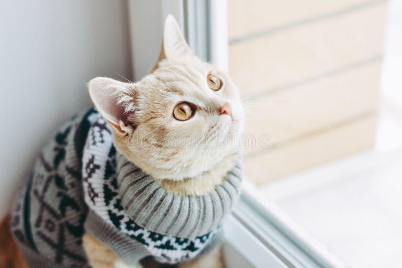 Le chat sur le rebord de fen?tre repose et regarde la fen?tre photo libre de droits