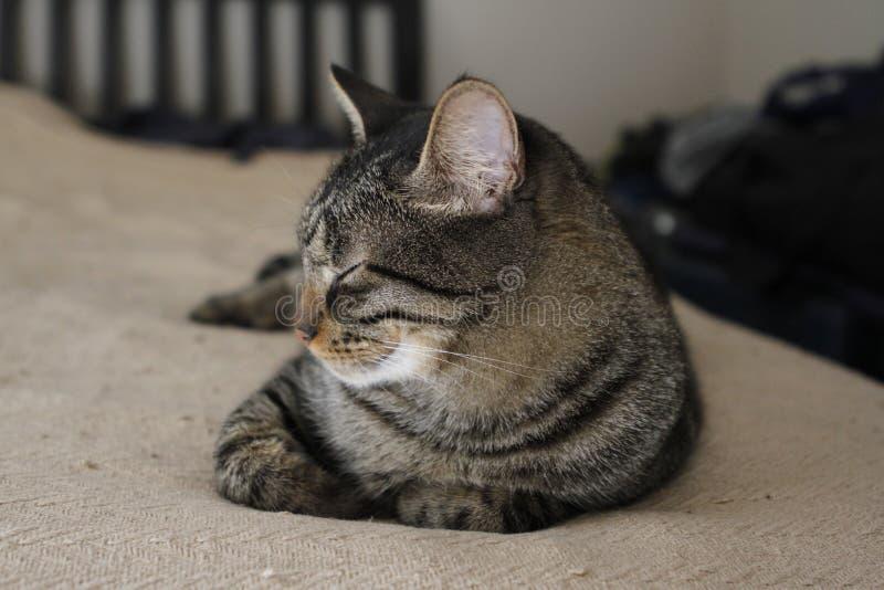 Le chat tigré détend sur le lit images stock