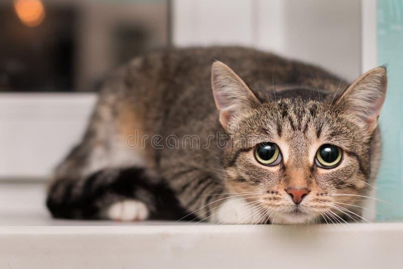 Le chat très effrayé s'est rétréci à la fenêtre photo stock