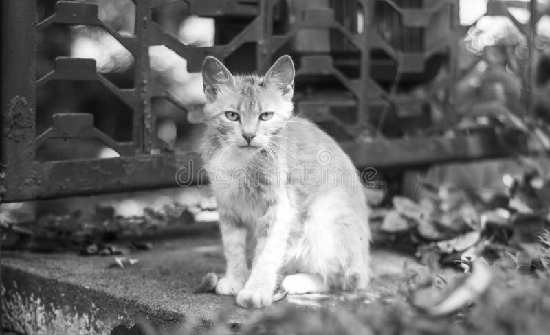 Le chat visite photo stock