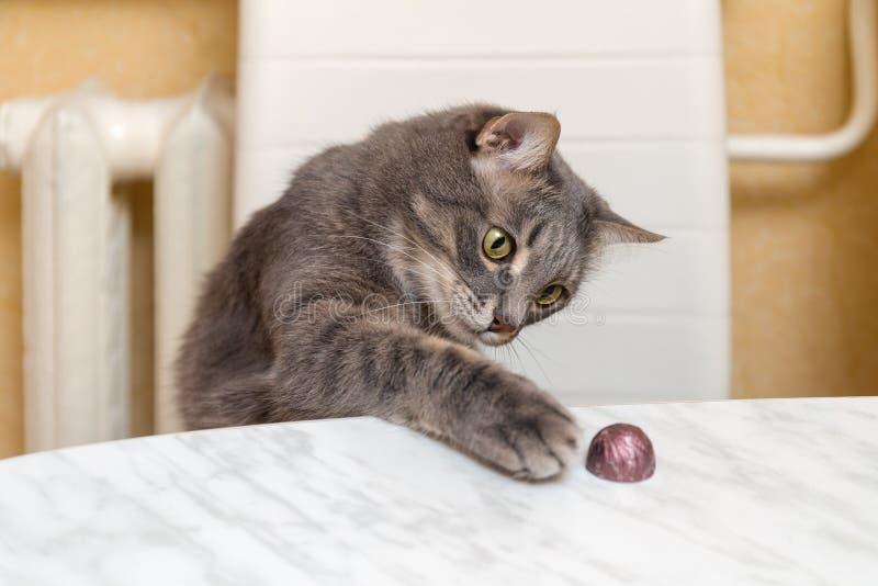 Le chat vole la sucrerie image libre de droits