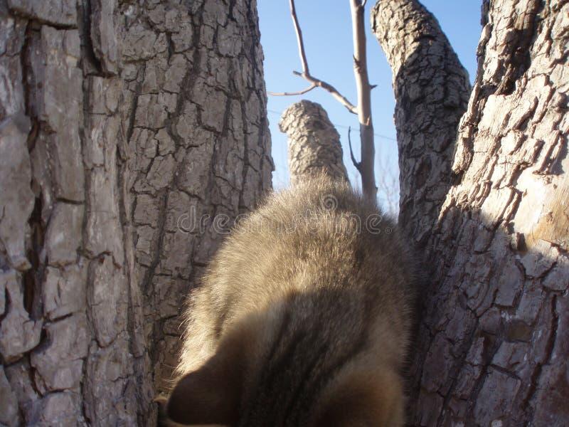 Le chaton a été déguisé images libres de droits