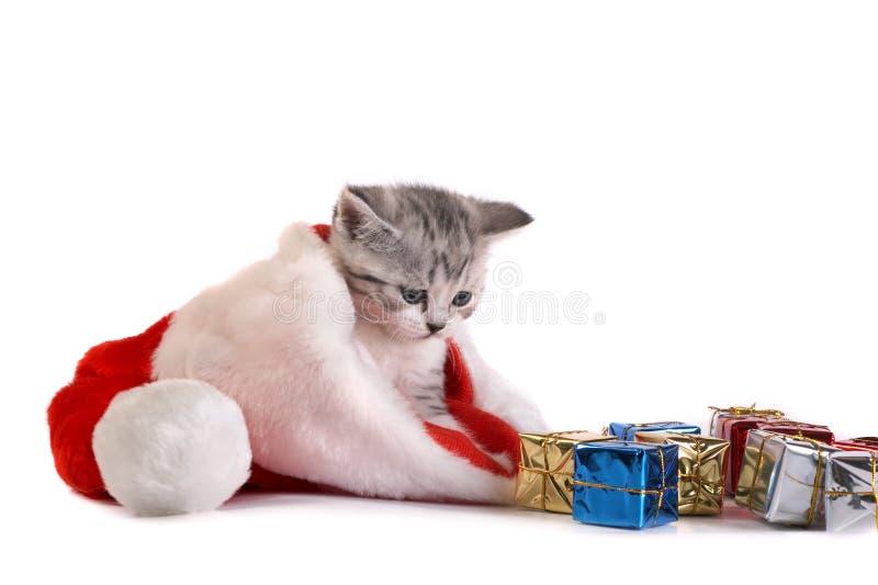 Le chaton photos stock