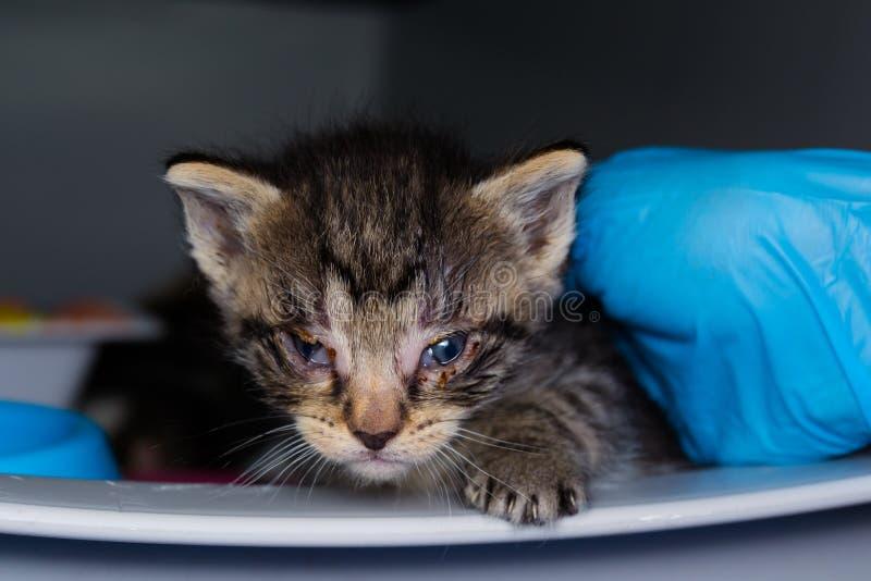 Le chaton avec la conjonctivite à la clinique vétérinaire photos libres de droits