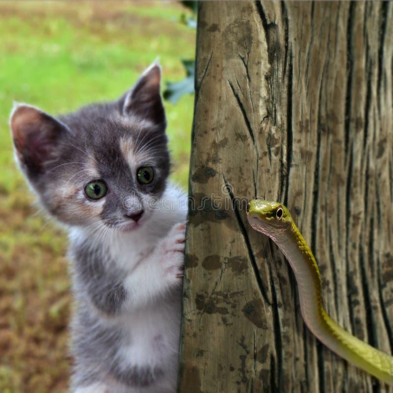 Le chaton contacte le serpent images stock