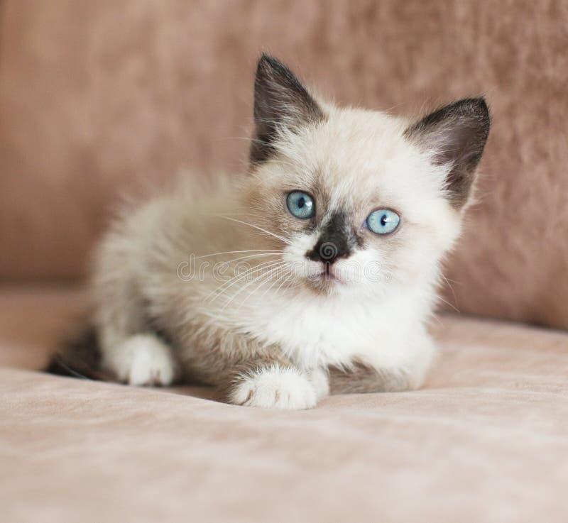 Le chaton est sur le canapé photo stock