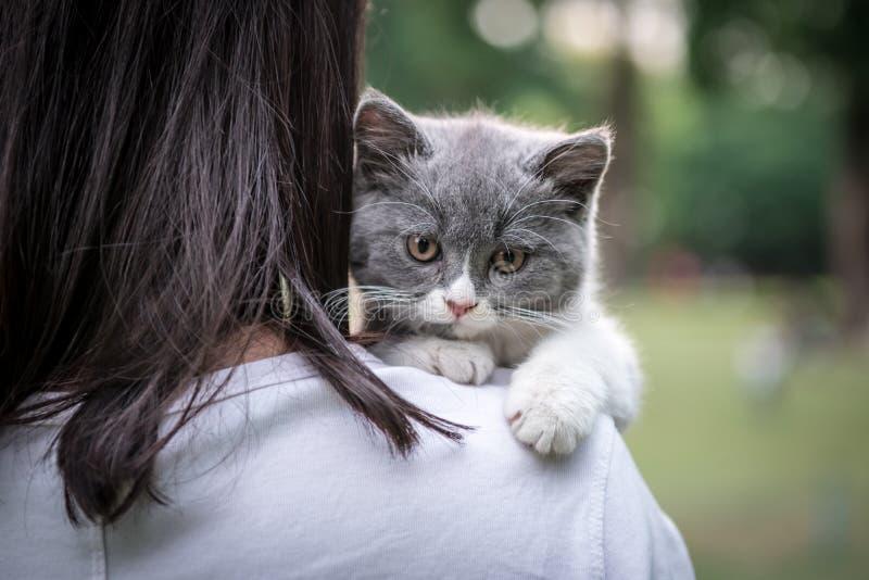 Le chaton gris étendu sur l'épaule image libre de droits