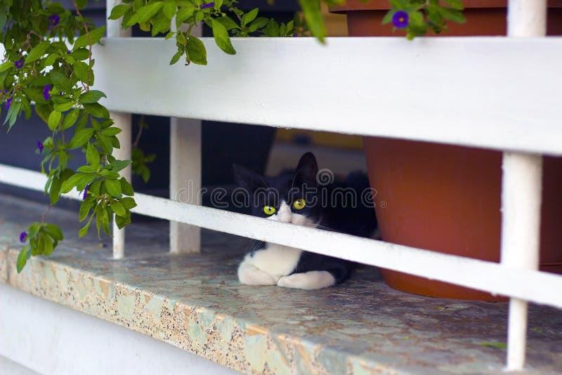 Le chaton noir et blanc se repose à la maison clôturée de terrasse photographie stock