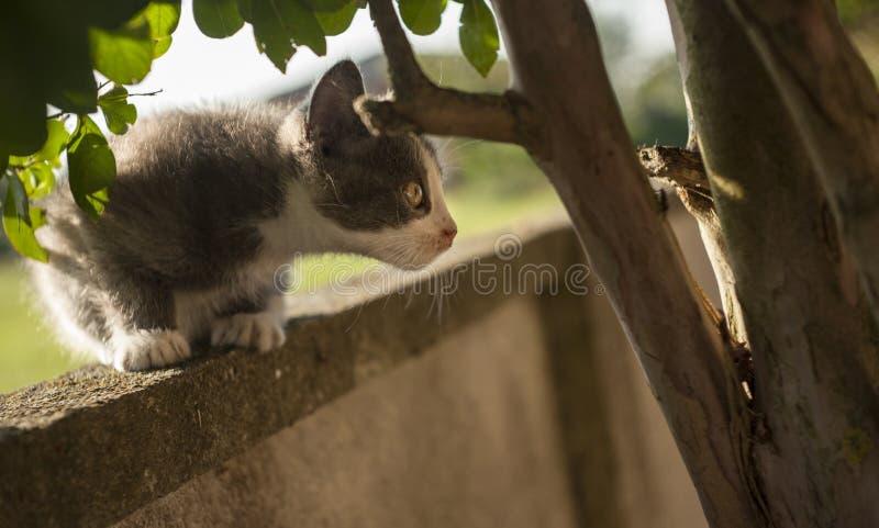 Le chaton prêt à sauter photographie stock