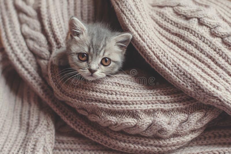 Le chaton se repose sur une couverture photos libres de droits