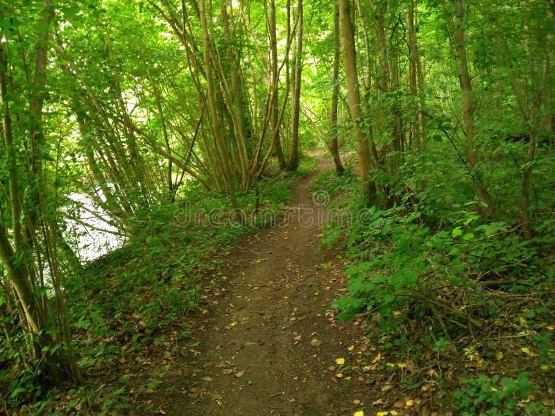 Le chemin dans la forêt image libre de droits