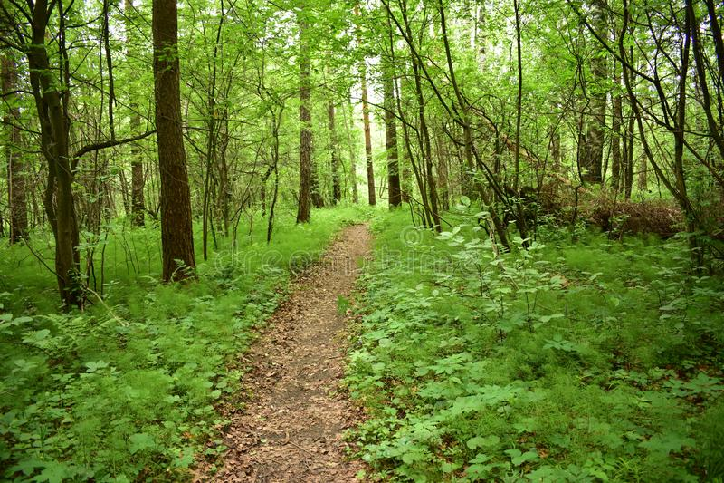 Le chemin dans la forêt, la forêt est un site de vacances préféré pour des millions de personnes, il est ici que vous pouvez trou photos stock