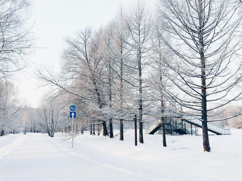 Le chemin dans la forêt neigeuse images libres de droits