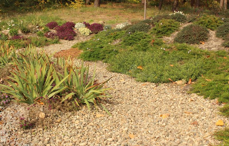 Le chemin de gravier de pois et le parterre de succulents en automne font du jardinage images libres de droits
