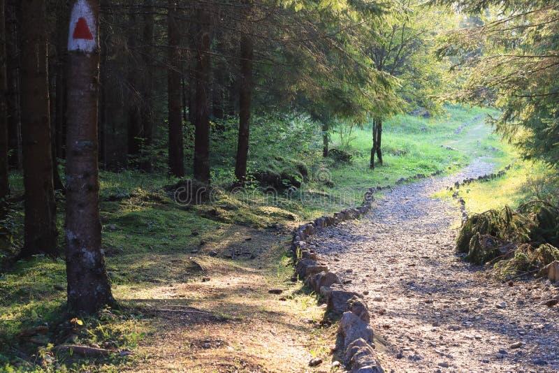 Le chemin de pierre de forêt de montagne a marqué l'itinéraire au coucher du soleil photo stock